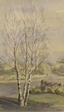 Watercolour Silver Birches, Ladywell